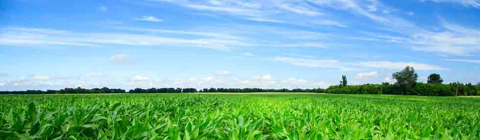 Seed Treatment, Crop Protection,  & Fertilizer Colorants